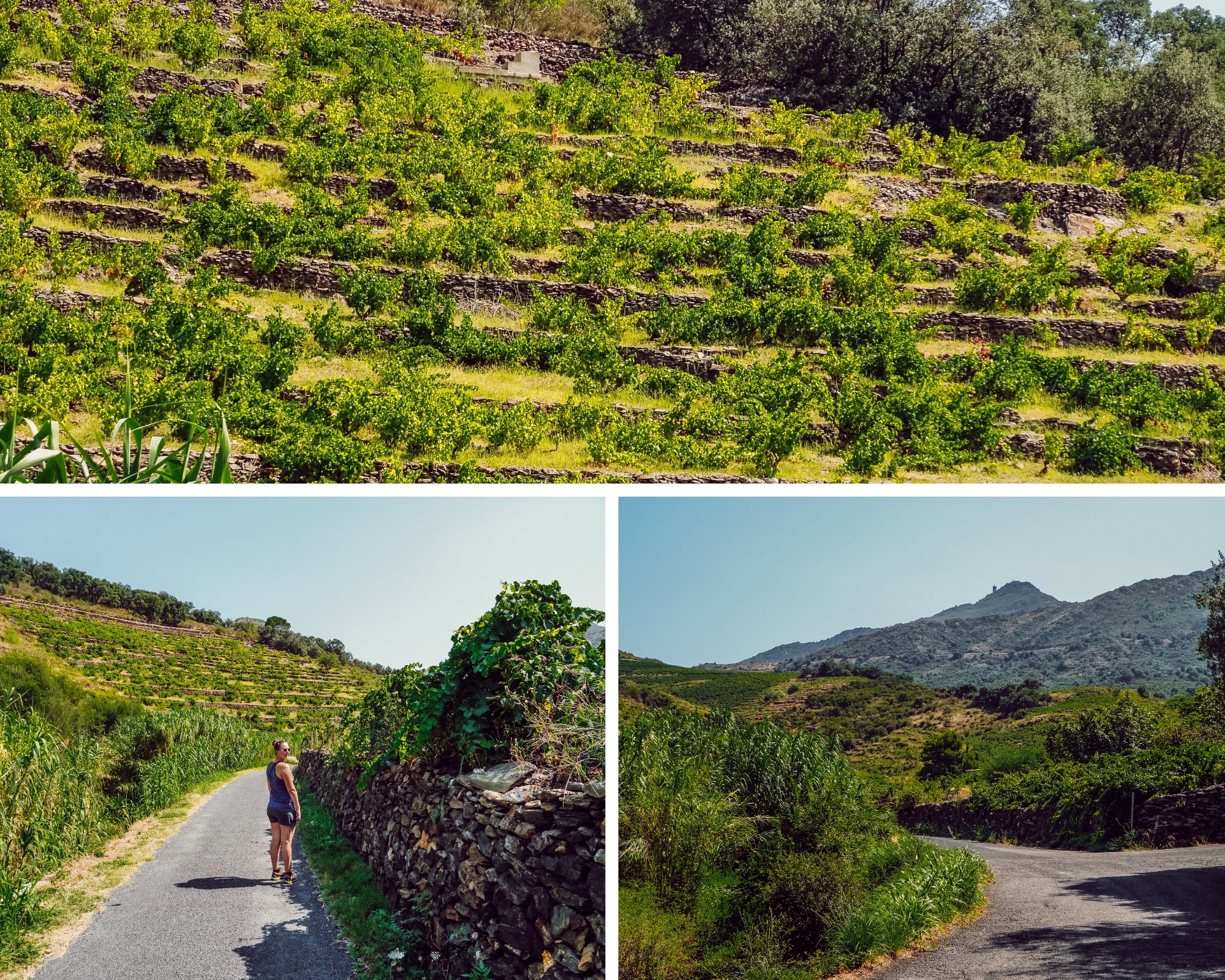 sur les route de la randonnée de Collioure