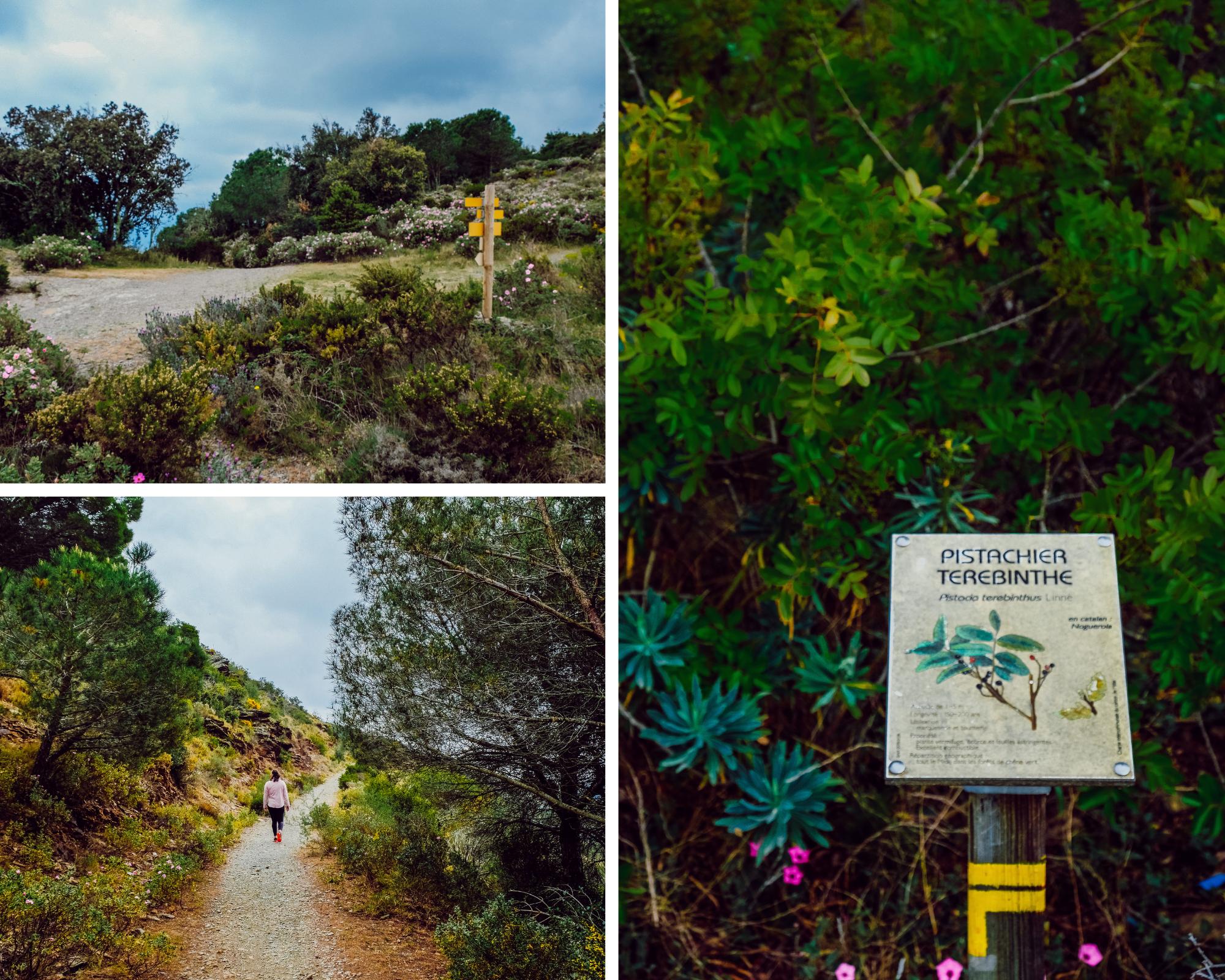 Randonnée du Sentier Botanique